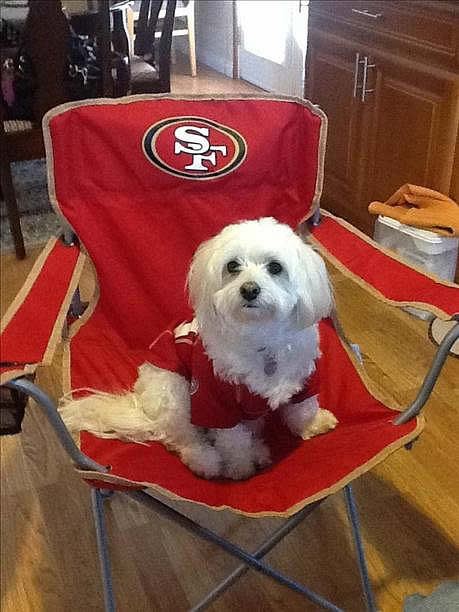 "<div class=""meta image-caption""><div class=""origin-logo origin-image ""><span></span></div><span class=""caption-text"">Photo submitted via uReport. Are you a 49ers fan? Send us a photo or video of your 49ers spirit to uReport@kgo-tv.com and we'll post it here: http://bit.ly/WxySUx.</span></div>"