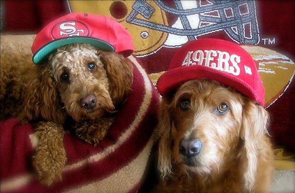 "<div class=""meta ""><span class=""caption-text "">Photo submitted via uReport. Are you a 49ers fan? Send us a photo or video of your 49ers spirit to uReport@kgo-tv.com and we'll post it here: http://bit.ly/WxySUx.</span></div>"