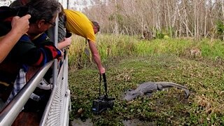 ABC7's @WayneFreedman and photographer Randy Davis spot an alligator.
