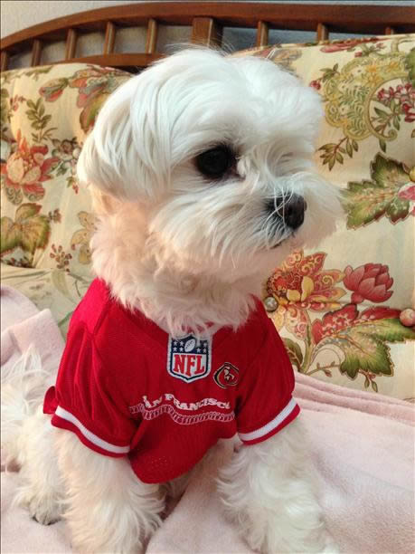 "<div class=""meta ""><span class=""caption-text "">Submitted by Zachary via uReport.  Are you a 49ers fan? Send us a photo or video of your 49ers spirit to uReport@kgo-tv.com and we'll post it here: http://bit.ly/WxySUx.</span></div>"