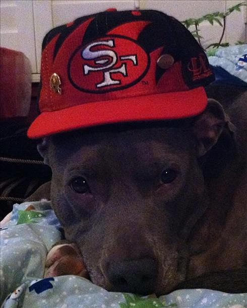 "<div class=""meta ""><span class=""caption-text "">Submitted via uReport.  Are you a 49ers fan? Send us a photo or video of your 49ers spirit to uReport@kgo-tv.com and we'll post it here: http://bit.ly/WxySUx. </span></div>"