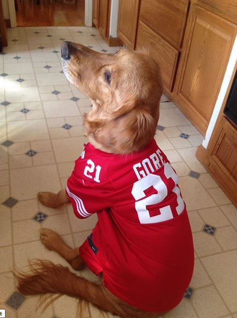 "<div class=""meta ""><span class=""caption-text "">49er fans, keep the photos coming!  Send to uReport@kgo-tv.com and we may show them off on air! (Submitted via Facebook by Paula Joyce Johnson)</span></div>"
