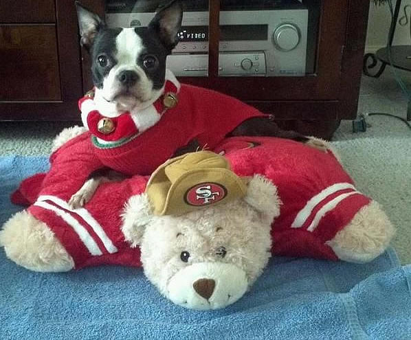 49ER FAN FEVER! (Photo submitted via uReport)