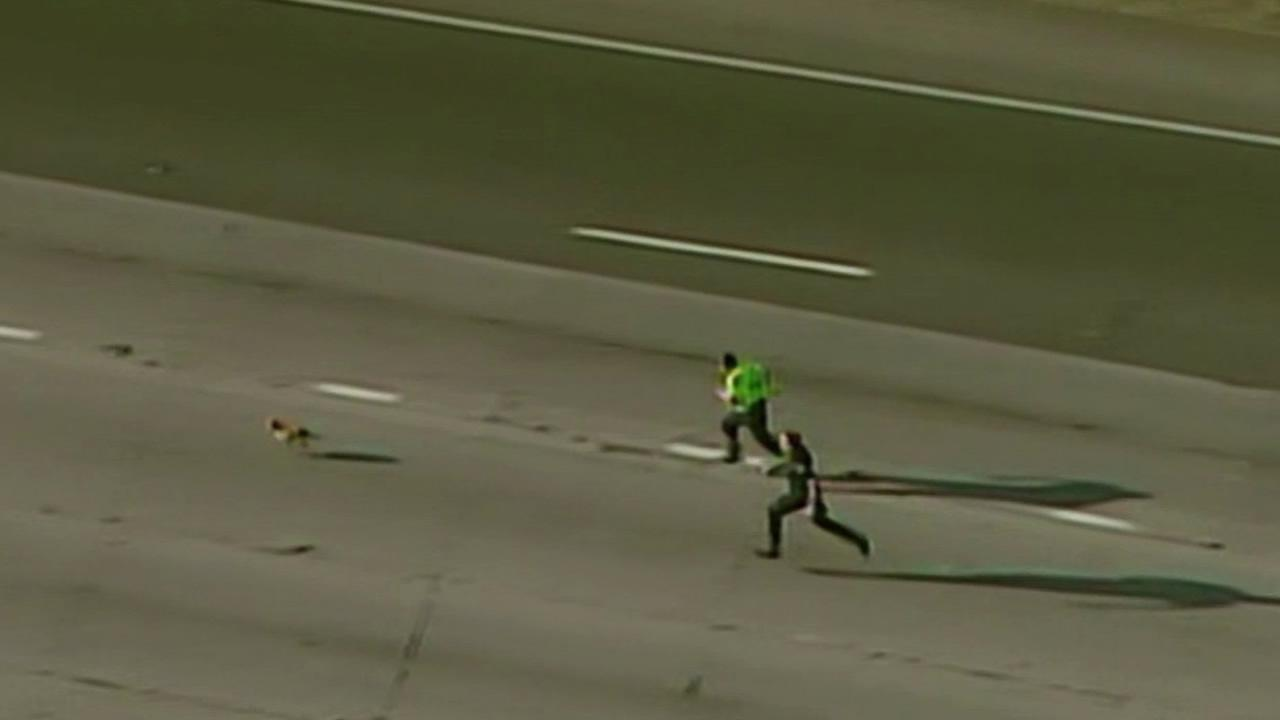 A loose dog shut down Highway 50 in Sacramento.