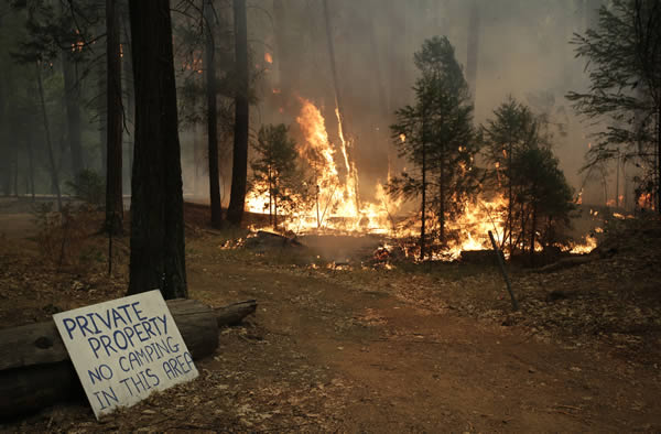 Trees burn as firefighters continue to battle the Rim Fire near Yosemite National Park, Calif., on Sunday, Aug. 25, 2013. With winds gusting to 50 mph on Sierra mountain ridges and flames jumping from treetop to treetop, hundreds of firefighters have been deployed to protect this and other communities in the path of the Rim Fire raging north of Yosemite National Park. (AP Photo/Jae C. Hong)