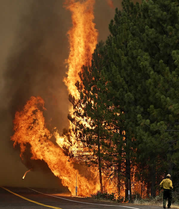 The Rim Fire burns along Highway 120 near Yosemite National Park, Calif., on Sunday, Aug. 25, 2013