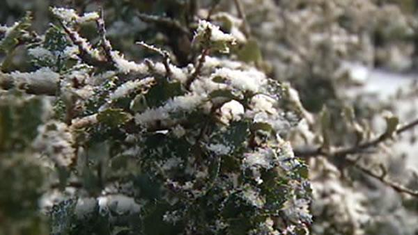 The Bay area got snow in some parts and record cold temperatures.