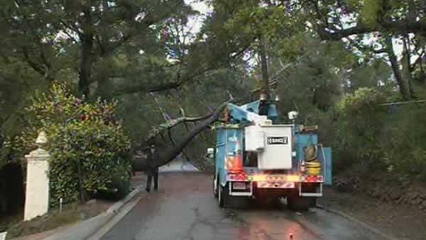 Stormy weather knocks out power, downs trees