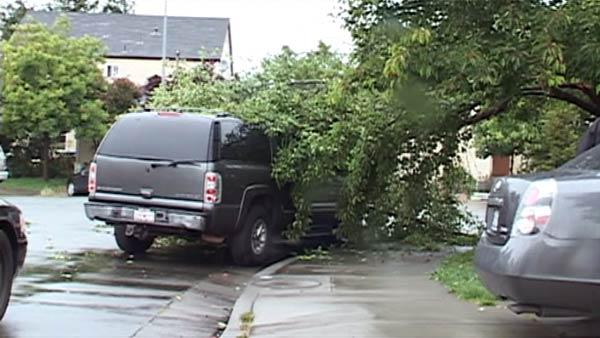 A tree toppled onto a Chevy Suburban in Santa Rosa.
