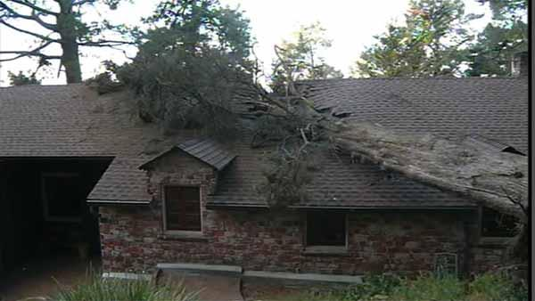 The howling winds blew a huge cypress tree into a home in the Oakland Hills. It hit the roof between the bedrooms of their two small children. Nobody was injured but the family is moving out.