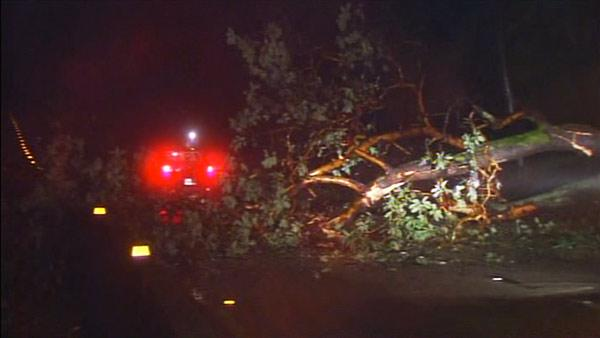 A tree fell on Highway 17 early Thursday morning