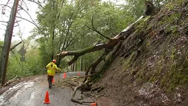 An old oak tree was uprooted and fell across Happy Valley Road in Lafayette.