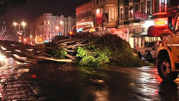 Tree falls in North Beach