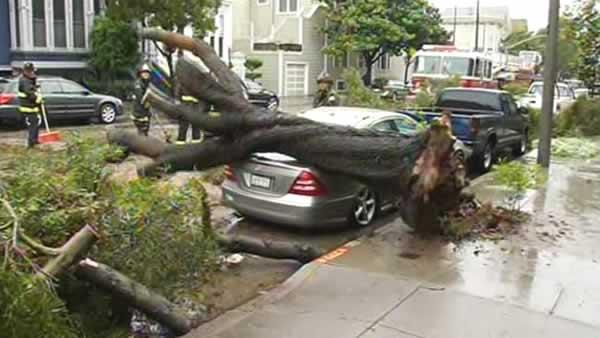 Storm-toppled tree damages car in San Francisco