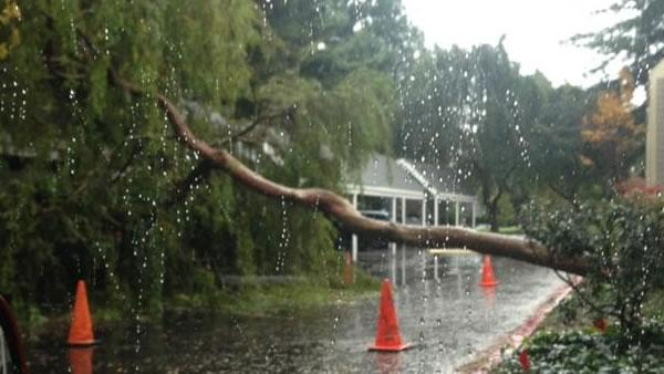 Storm-toppled tree falls on apartment complex carport in Mountain View