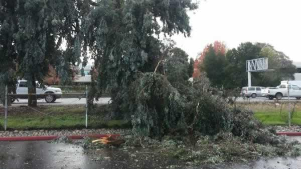 Tree down along Highway 101
