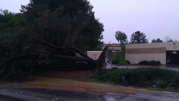 Tree down in Benicia