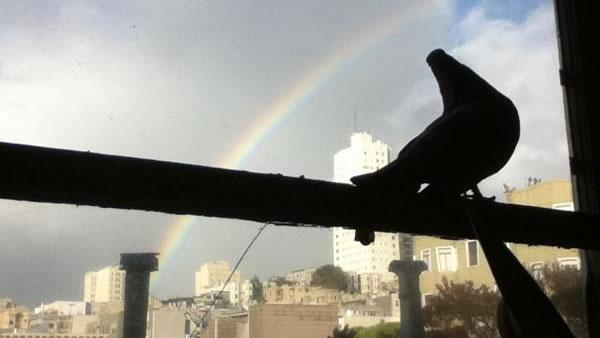 Pet pigeon watching rainbow over Russian Hill in San Francisco