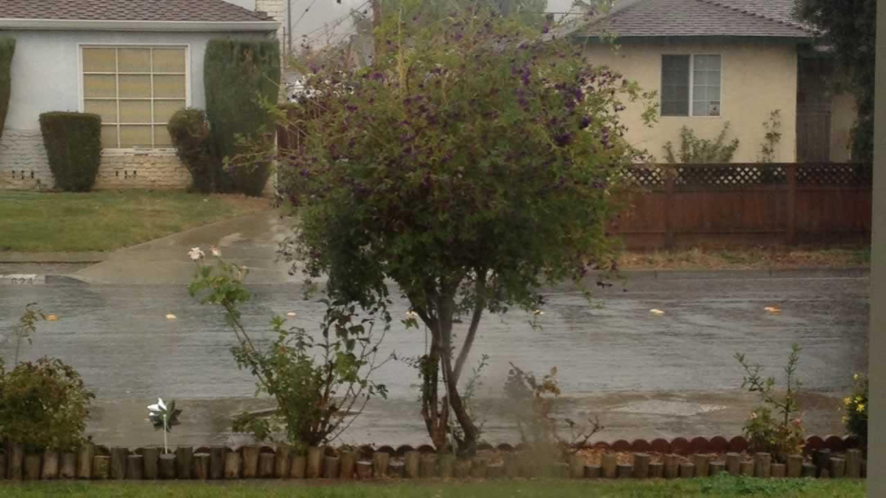Enjoying the beautiful rainy weather! in East San Jose in November 20, 2013. (Submitted by Amy Rodrigues via uReport@kgo-tv.com)