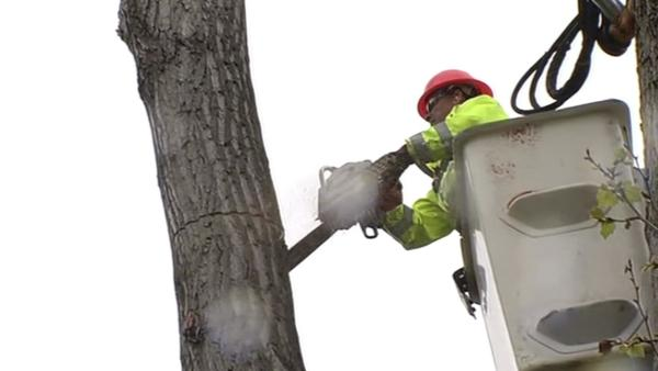 Crews in Oakland clear trees ahead of storm