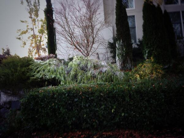 Ice forms in Danville due to freezing temperatures. <span class=meta>(photo submitted by @EastBayMark via Twitter)</span>