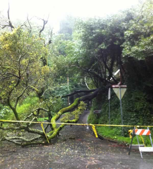 Downed tree in Mill Valley, blocking access to...