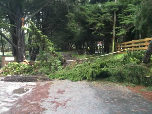 "<div class=""meta image-caption""><div class=""origin-logo origin-image ""><span></span></div><span class=""caption-text"">Windy conditions knocked down a tree at 1330 Ivy St. in Montara, CA over the weekend. (Photo submitted by Emily Green)</span></div>"