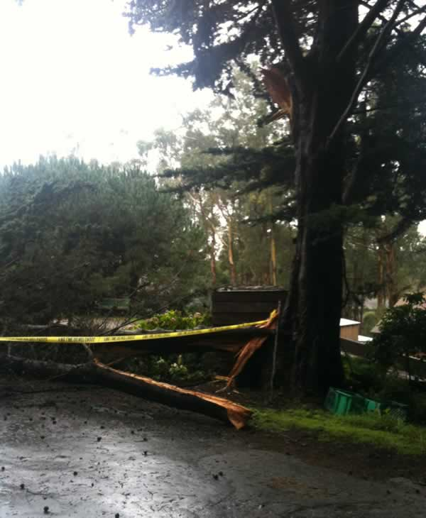 "<div class=""meta ""><span class=""caption-text "">Windy conditions knocked down a tree at 1330 Ivy St. in Montara, CA over the weekend. (Photo submitted by Emily Green)</span></div>"