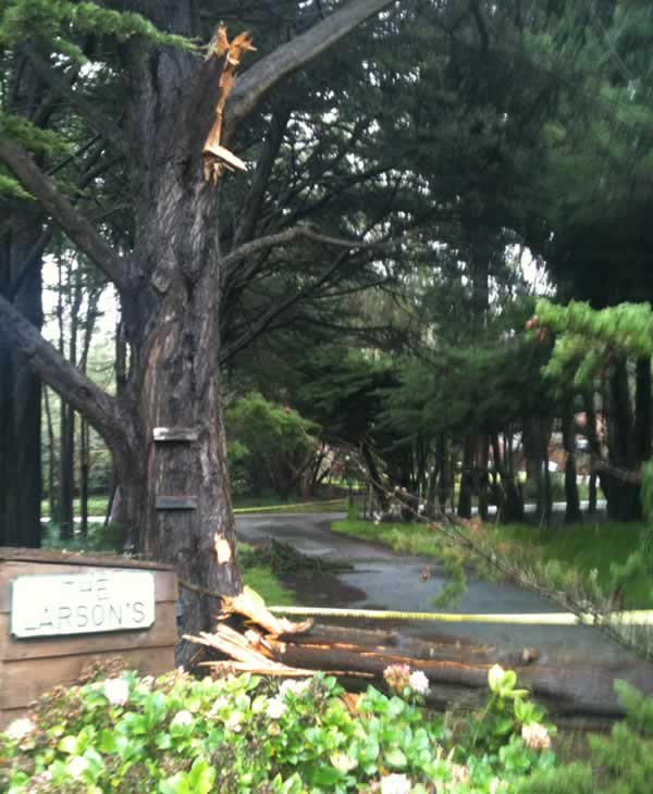 Windy conditions knocked down a tree at 1330 Ivy St. in Montara, CA over the weekend. (Photo submitted by Emily Green)