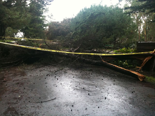 Stormy weather downs trees across Bay Area