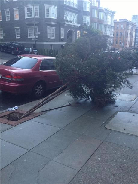 Tree down in San Francisco's Nob Hill (Photo submitted via uReport)