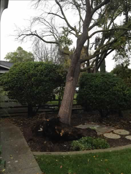 Tree down in Saratoga (Photo submitted via uReport)