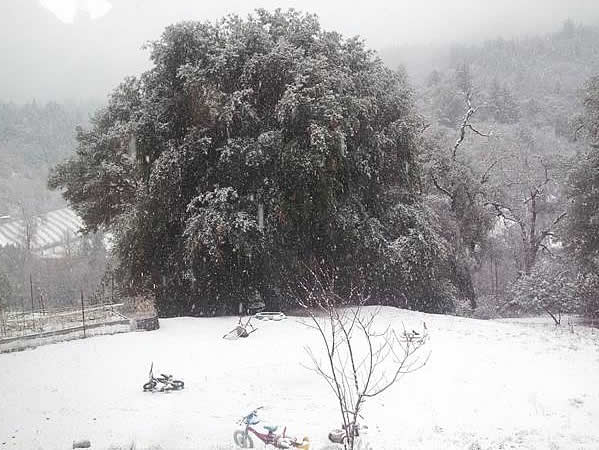 Snow falling in Redwood Valley, Calif. on December 8, 2013 <span class=meta>(Submitted by anonymous user via uReport)</span>