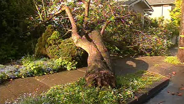 A tree came down in Berkeley Friday, April 13th. <span class=meta>(KGO)</span>