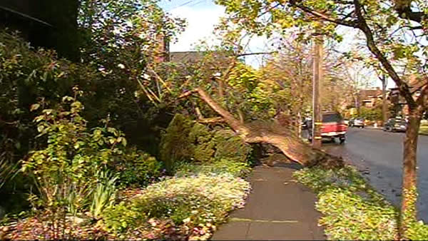 "<div class=""meta image-caption""><div class=""origin-logo origin-image ""><span></span></div><span class=""caption-text"">A tree came down in Berkeley Friday, April 13th. (KGO)</span></div>"