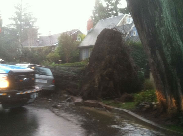A tree fell onto a car on Crescent Avenue and Clark Drive in San Mateo. (Photo courtesy of Vic Lee)