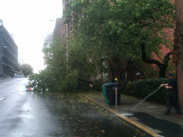 Windy conditions knocked down this tree at Battery and Jackson in San Francisco&#39;s Financial District over the weekend. <span class=meta>(KGO)</span>