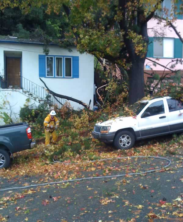Windy conditions damaged trees and power lines at 171 Marlow Drive in Oakland over the weekend. &#40;Photo submitted by Gregory Schwartz&#41; <span class=meta>(KGO)</span>