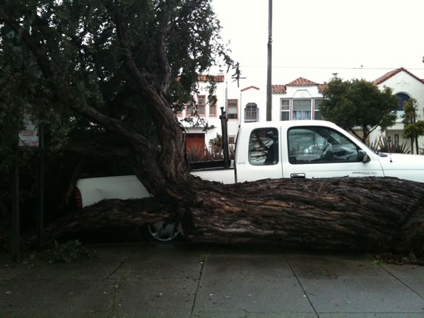 Tree falls on truck in at Alemany and Silver Avenue in San Francisco, March 24, 2011 (Photo submitted via uReport)