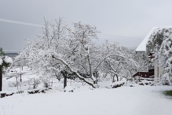 Snow in Lakeport, Calif., February 25, 2011