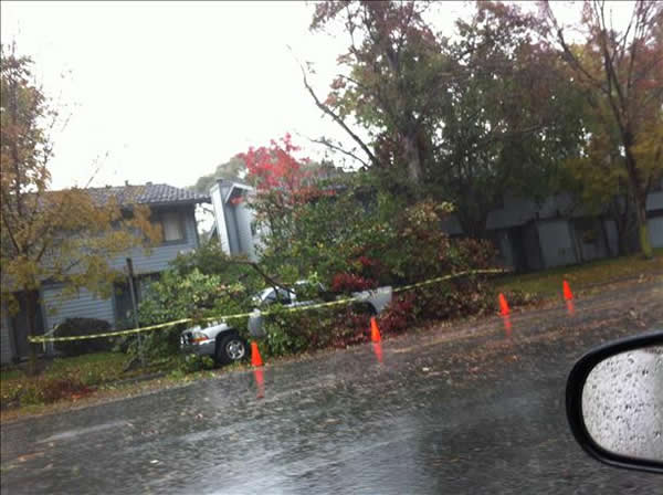 Fallen tree in Newark (Photo submitted via uReport)
