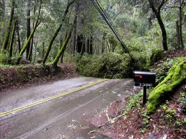 Fallen tree near Scotts Valley, March 24, 2011 (Photo submitted by user Richard Ward via uReport)