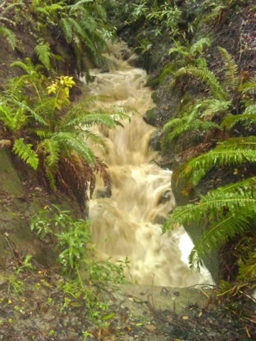 Creek flooding in Santa Cruz, March 24, 2011 (Photo submitted by user Wendy via uReport)
