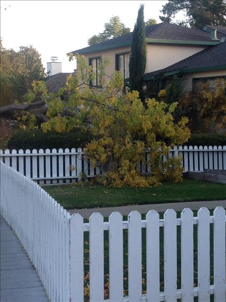 "<div class=""meta ""><span class=""caption-text "">Tree branch in Redwood City fell into a resident's yard. (submitted by Janet Lawson via uReport)</span></div>"