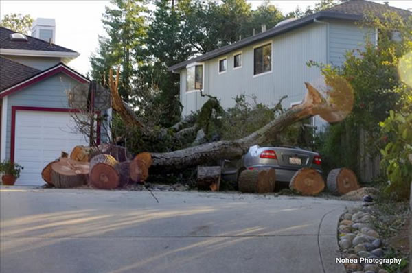 Wind storm damage in Scotts Valley