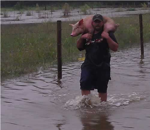 Dan Bird of Newfield, New Jersey carries a pig to safety. The Eastern Seaboard suffered a significant amount of flooding as a result of Hurricane and Tropical Storm Irene. (Photo: WPVI-TV)