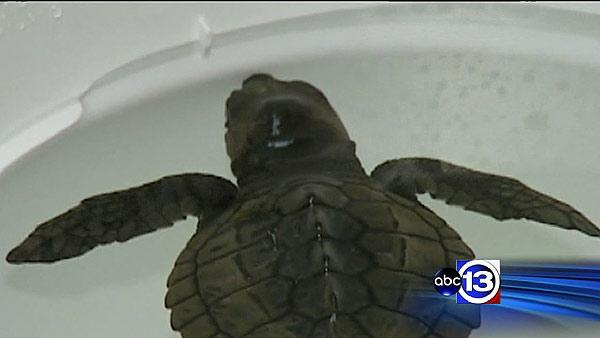 Bolivar project held up by rare turtle