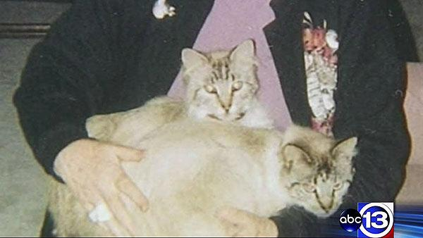 Cat killings put residents on edge
