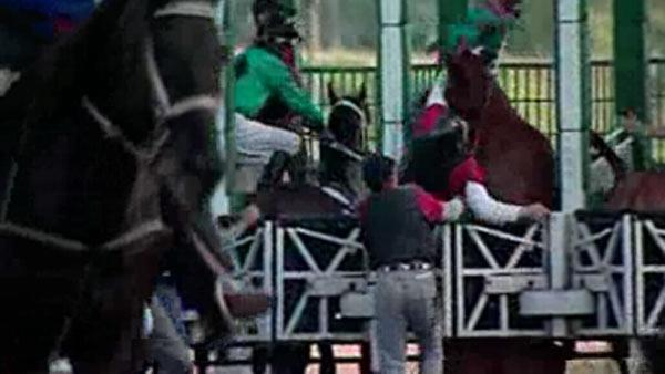 Horse race accident leaves several injured