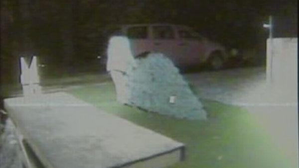 Repeat Christmas tree thief caught on camera